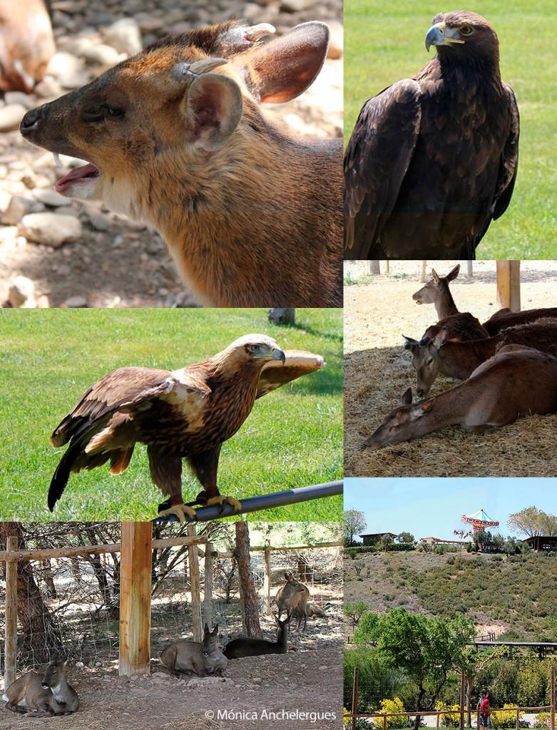 Animales en sendaviva