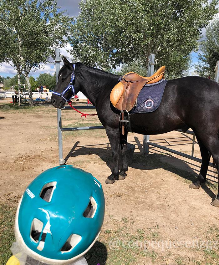 Pony en la Hípica