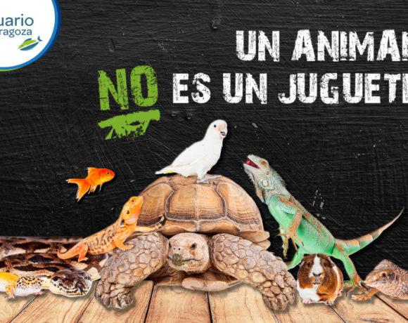 no compres animales exoticos